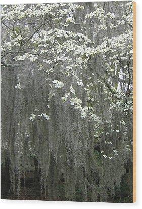 Dogwood And Spanish Moss Wood Print by Susan Richardson