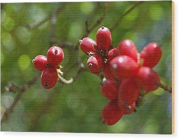 Dogwood Berries Wood Print by Beverly Hammond