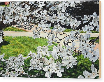 Dogwood Blooms In A Virginia Church Yard Wood Print by Thomas Akers