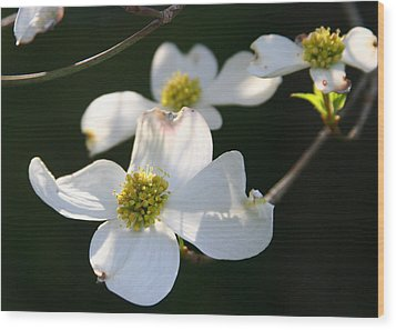 Wood Print featuring the photograph Dogwood Blossom by Paula Tohline Calhoun