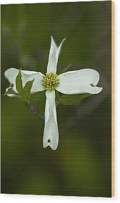 Dogwood Cross Wood Print