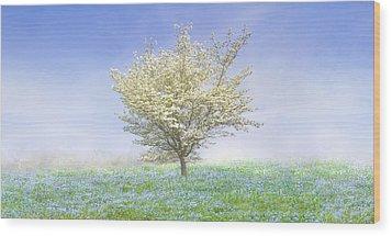 Dogwood In The Mist Wood Print by Debra and Dave Vanderlaan