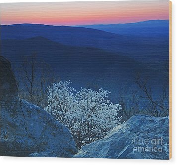 Dogwood Spring Sunset Blue Ridge Parkway Wood Print by Nature Scapes Fine Art