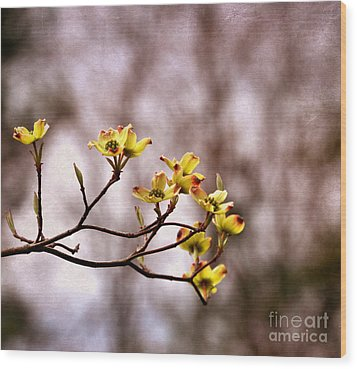 Wood Print featuring the photograph Dogwood by Tamera James
