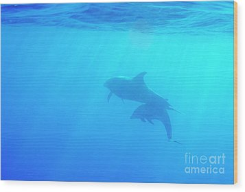 Dolphin Mother And Calf Wood Print by Sami Sarkis