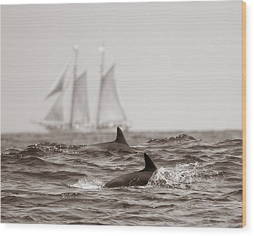Dolphins With Ship Wood Print by Will Edwards