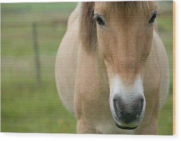 Domestic Horse Equus Caballus Portrait Wood Print by Cyril Ruoso