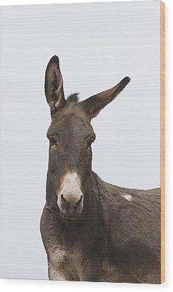 Donkey At The Hajigak Pass, Vardak Wood Print by Peter Langer