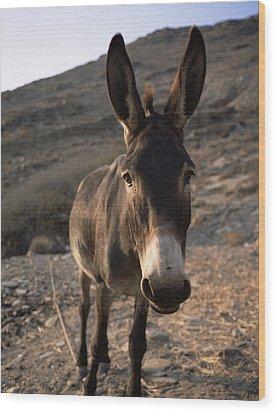 Donkey Wood Print by Bjorn Svensson