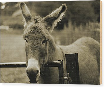 Donkey Wood Print by Dyker_the_horse_1976