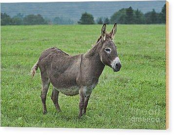 Donkey Wood Print by John Greim