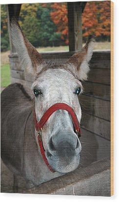 Donkey Looks Wood Print by LeeAnn McLaneGoetz McLaneGoetzStudioLLCcom