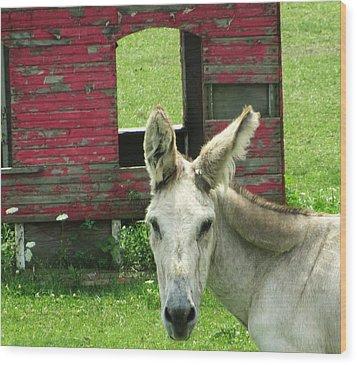 Donkey Wood Print by Todd Sherlock