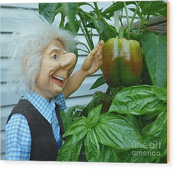 Wood Print featuring the photograph Dorf Grandpa Doll Picking Bell Peppers by Renee Trenholm