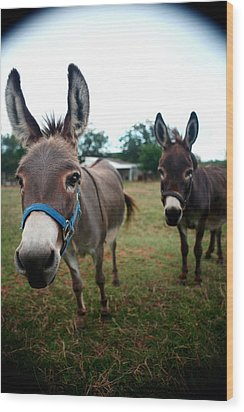 Wood Print featuring the photograph Doting Donkeys by Lon Casler Bixby