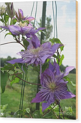 Wood Print featuring the photograph Double Clematis Named Crystal Fountain by J McCombie