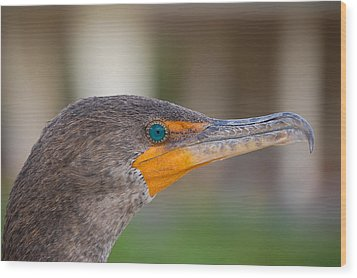 Double-crested Cormorant Wood Print by Rich Leighton