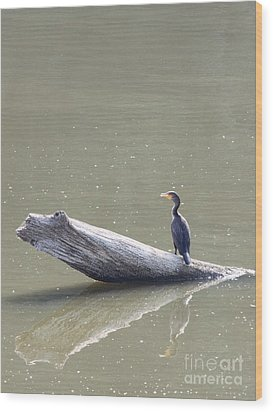Double-crester Cormorant Wood Print by Jack R Brock