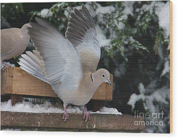 Dove On The Wing Wood Print