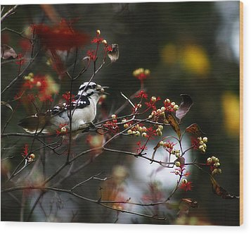 Downy Woodpecker And White Berries Wood Print by Scott Hovind