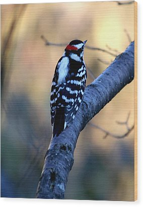 Wood Print featuring the photograph Downy Woodpecker by Elizabeth Winter