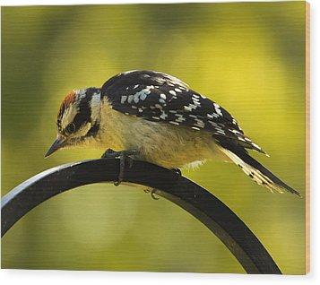 Downy Woodpecker Up Close 3 Wood Print by Bill Tiepelman