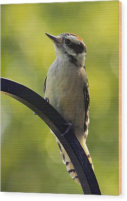 Downy Woodpecker Up Close Wood Print by Bill Tiepelman