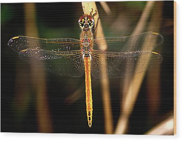 Wood Print featuring the photograph Dragon Fly 1 by Pedro Cardona