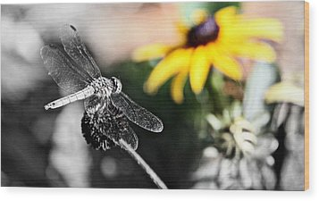 Dragon Fly And Yellow Black Eyed Susan Wood Print by Tam Graff
