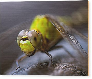 Dragon-fly  Wood Print