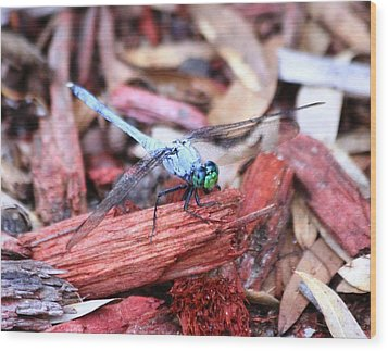 Wood Print featuring the photograph Dragon Fly by Jeanne Andrews