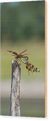 Dragon Fly Love Wood Print by Kelly Rader