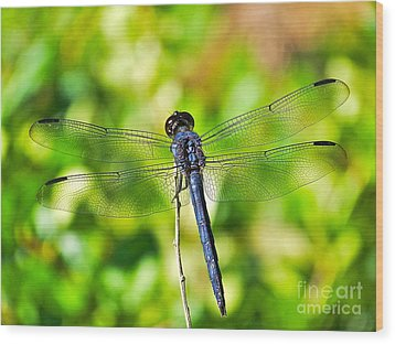 Wood Print featuring the photograph Dragon Fly Spread by Eve Spring