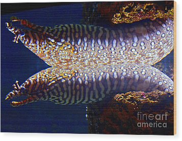 Dragon Moray Eels Wood Print by Pravine Chester