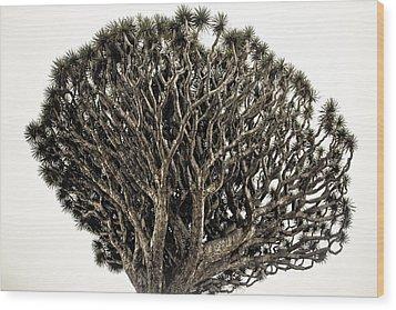Dragon Tree Wood Print