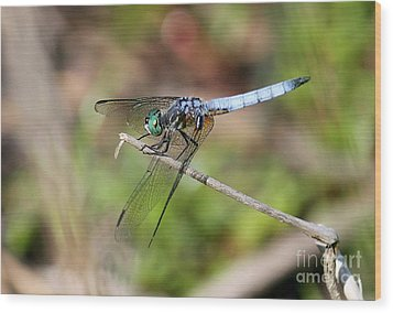 Dragonfly 2 Wood Print by Erica Hanel