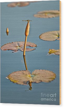 Wood Print featuring the photograph Dragonfly And Lotus by Luciano Mortula