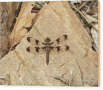 Wood Print featuring the photograph Dragonfly At Rest by Deniece Platt