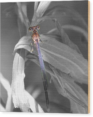 Dragonfly Bw With Color Wood Print