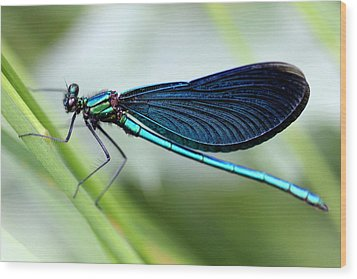Dragonfly Wood Print by Charlotte Therese Bjornstrom