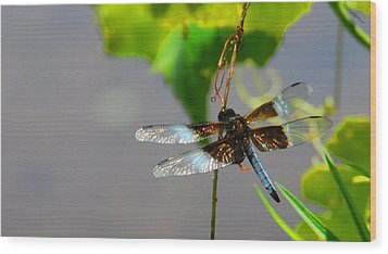 Dragonfly Wood Print by Cindy Manero