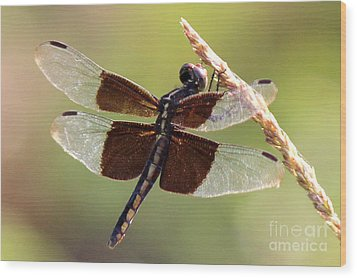 Wood Print featuring the photograph Dragonfly Closeup by Kathy  White