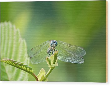 Wood Print featuring the photograph Dragonfly Face by Mary McAvoy