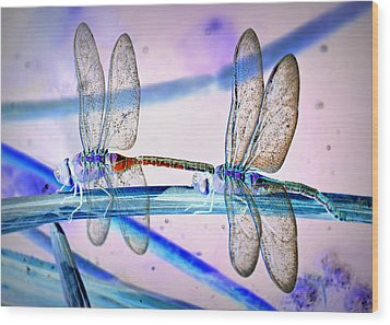 Dragonfly Fantasy Wood Print by Fraida Gutovich