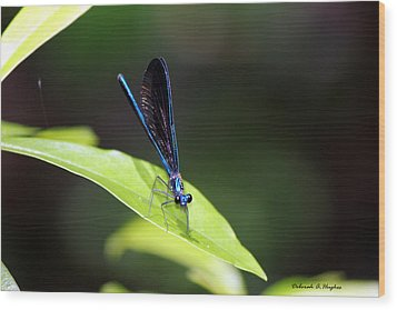 Dragonfly Fly Wood Print