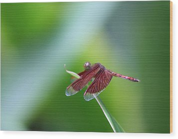 Dragonfly Wood Print by Gonca Yengin
