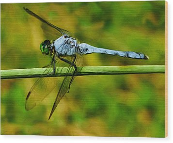 Dragonfly Wood Print by Jack Zulli