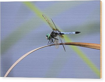 Dragonfly Wood Print by Laura Oakman