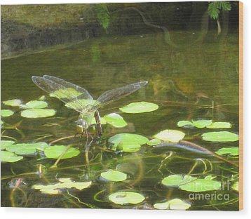 Wood Print featuring the photograph Dragonfly by Laurianna Taylor