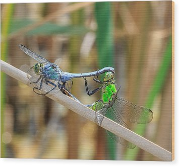 Dragonfly Love Wood Print by Everet Regal